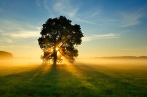 naturopathie-arbre soleil